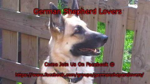 german shepherd lovers banner 3